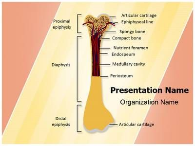 Bone structure powerpoint template is one of the best powerpoint bone structure powerpoint template is one of the best powerpoint templates by editabletemplates toneelgroepblik Image collections