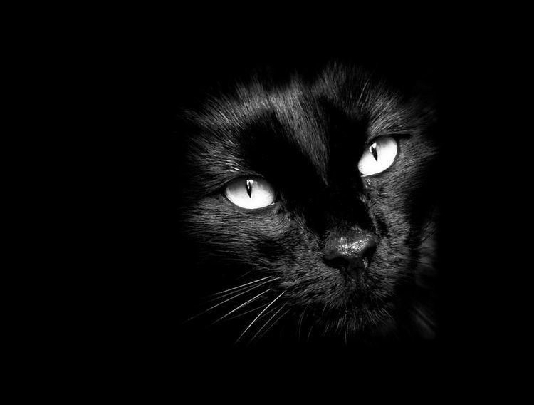 photo noir et blanc en portrait ou en paysage technique et logiciels cat black cats and animal. Black Bedroom Furniture Sets. Home Design Ideas
