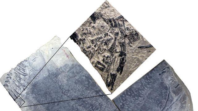 Scoperti in Cina i resti del dinosauro... 'mammifero' - Rai News - http://bit.ly/2knoEgZ - Pet Community and Social Network
