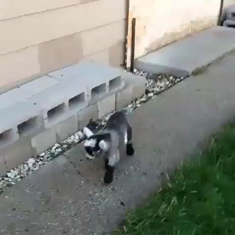 #cutestbabyanimal  #cutebabieanimals  #coolanimals Video IG @babygoatsdaily #baby #animals Cute baby animals that are worth watching till the end. Whether it's a baby dog, cat or any other animal, its smallest form will always make us fall for it. Watch this amazing cute baby animal videos that will bring a smile on your face and will fill your heart with joy and happiness.