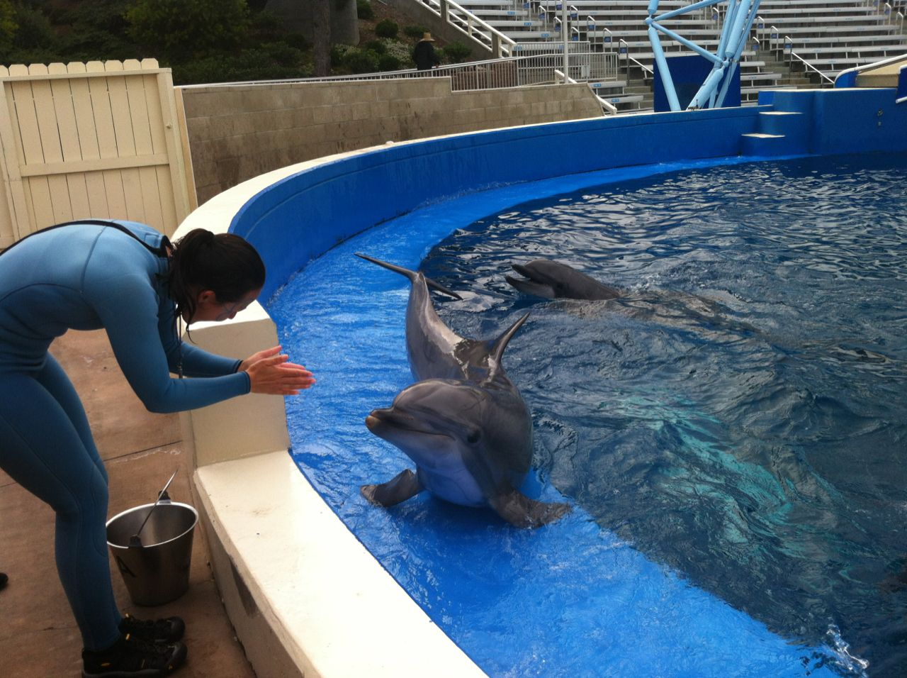Behind the scenes fun at SeaWorld's Blue Horizons show
