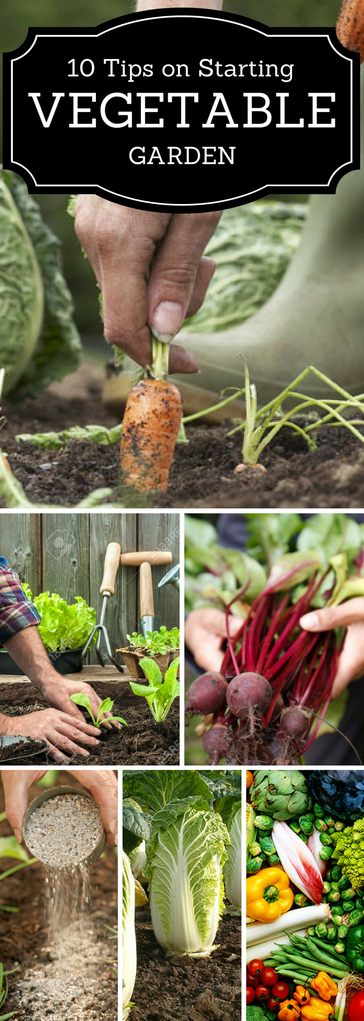 top 10 tips on starting your own vegetable garden vegetable