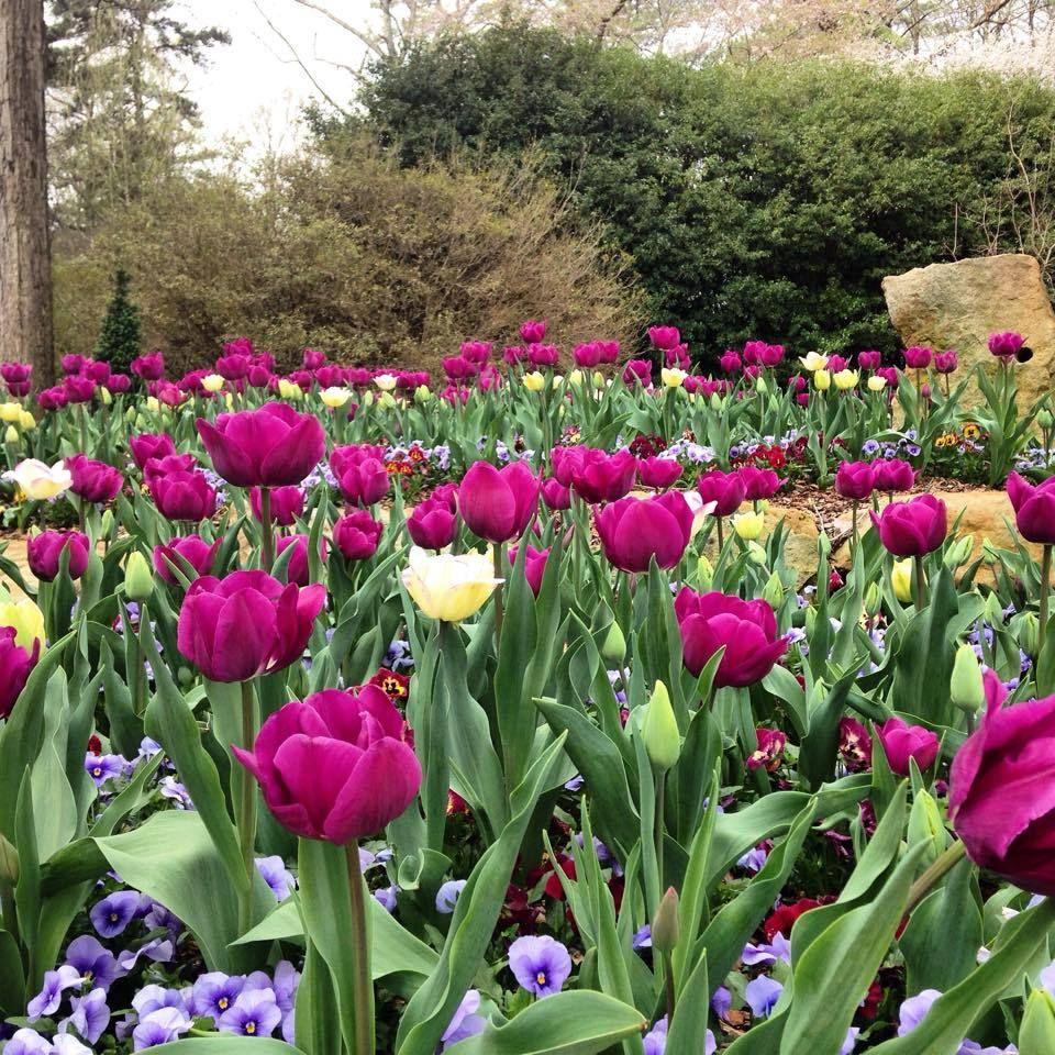 09384a1bc68e2dbfd14debd658f84095 - Birmingham Botanical Gardens Spring Plant Sale