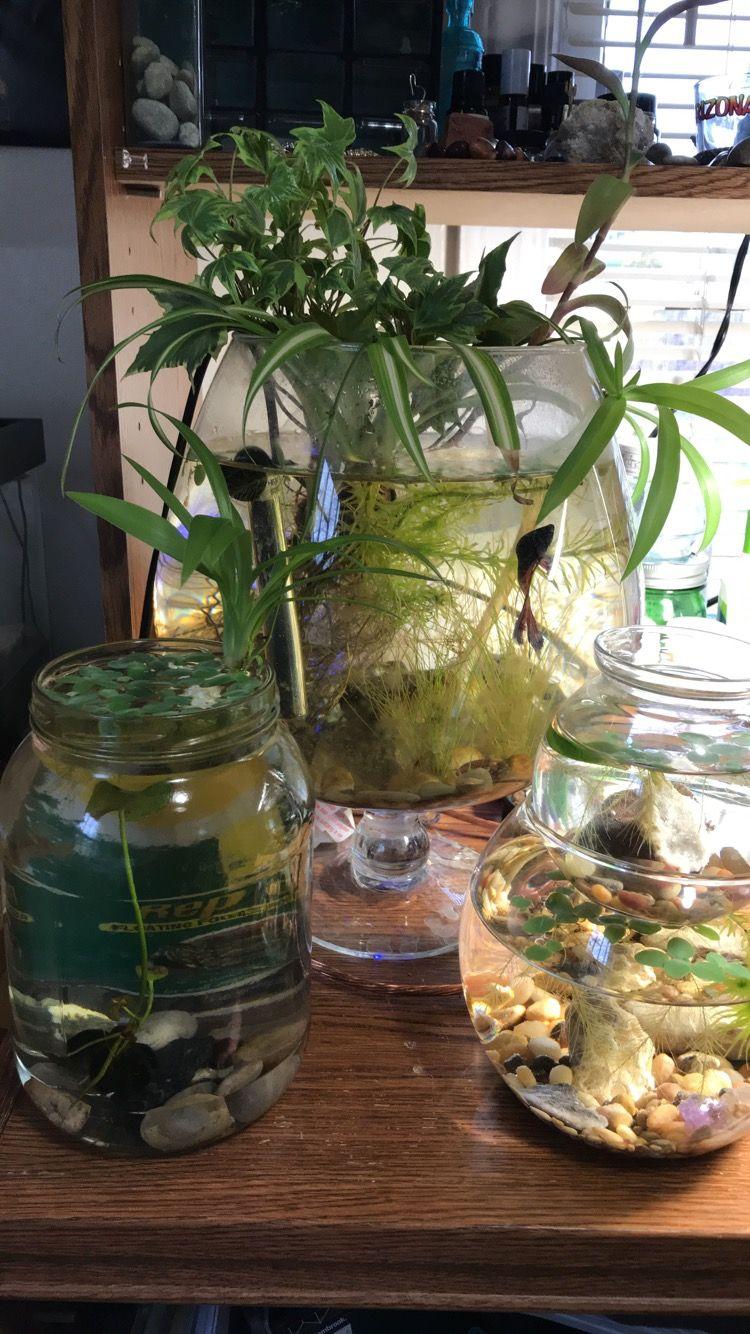 Mini aquaponics, fish + plants (With images) | Aquaponics ...