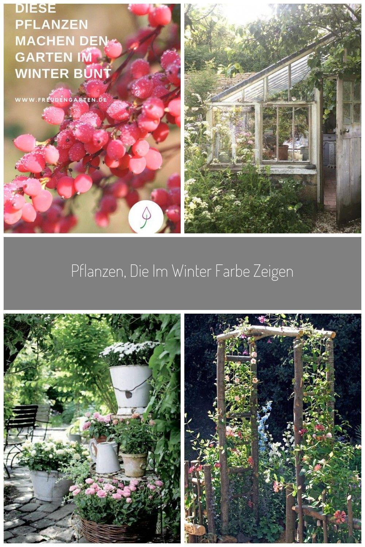Diese Sträucher bringen Farbe in den Garten im Winter garten Pflanzen die im Winter Farbe zeigen