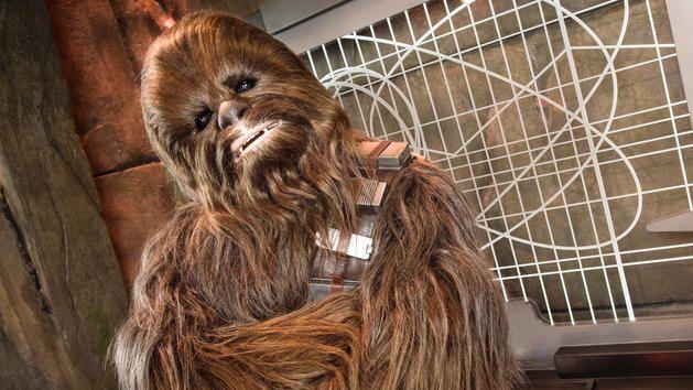 Chewbacca at Walt Disney World
