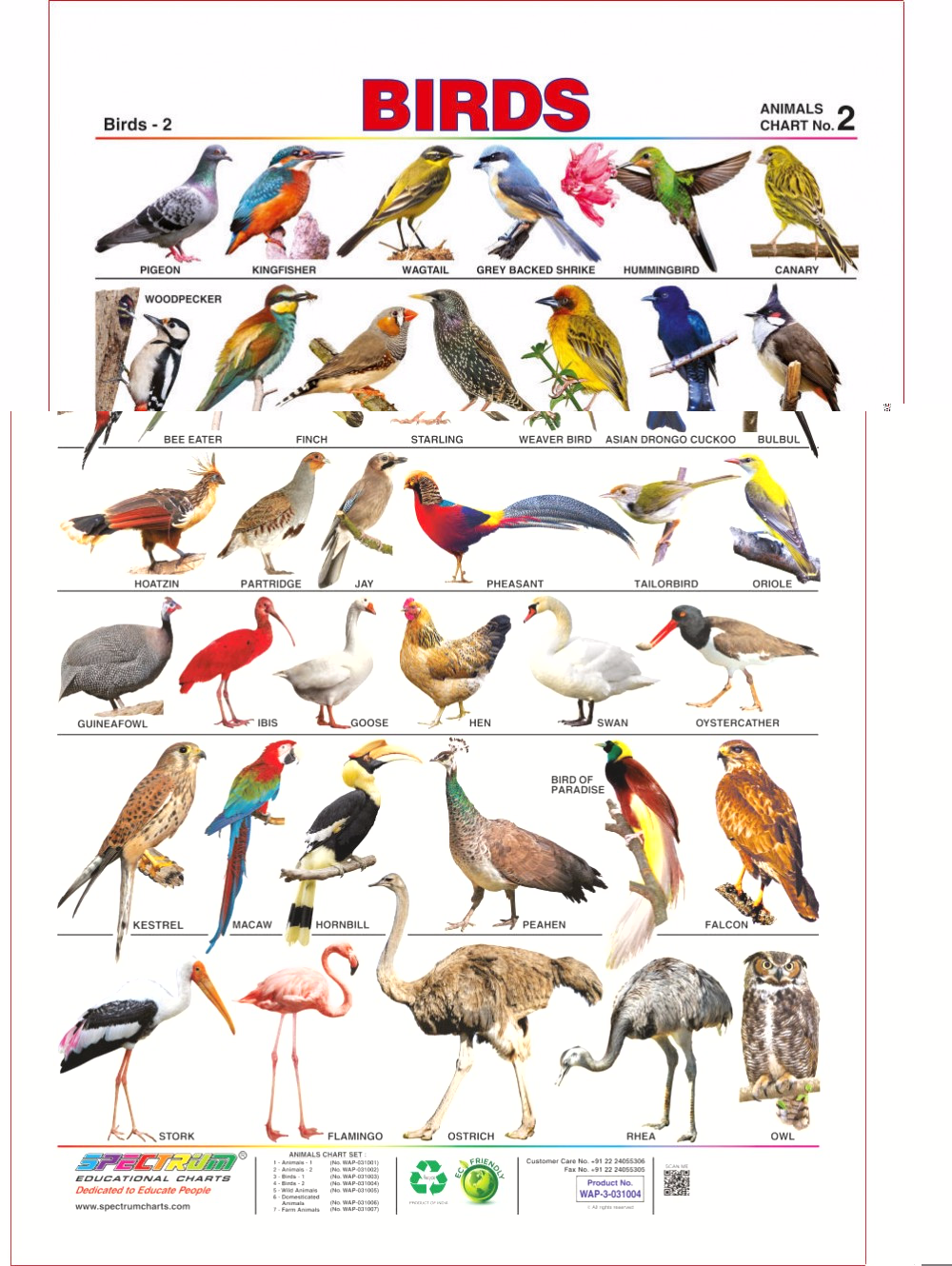 Birds Name in 2020 Wild animals pictures, Animals name
