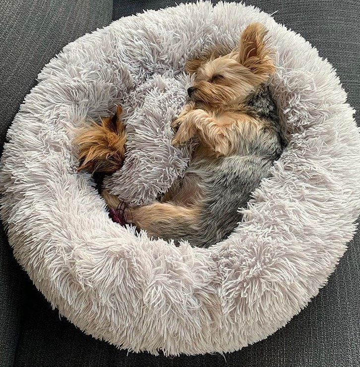Oh so cosy ️ princessfionamae in our Calming Pet Bed!