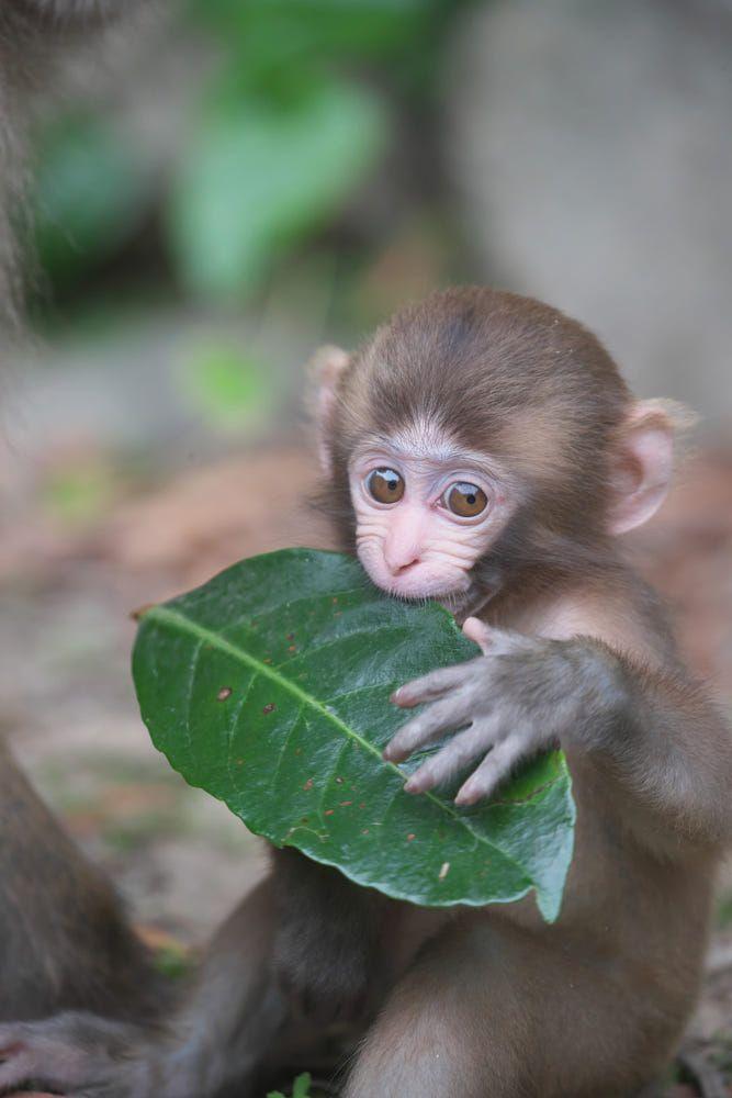 36 Best Pet monkey for sale ideas   pet monkey, pet monkey for sale, monkeys for sale
