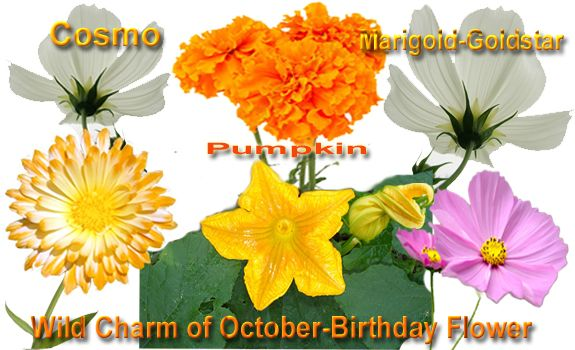 October S Birth Flower Is Cosmos A Symbol Of Order Peace And
