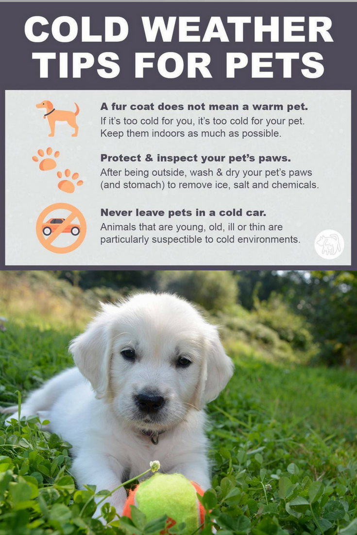 Heading In To Subzero Temps Here This Week In New England Please Be Mindful Of Your Pets Being Outside For Any Length Of Time When Bel Dog Spay Dogs Dog Care