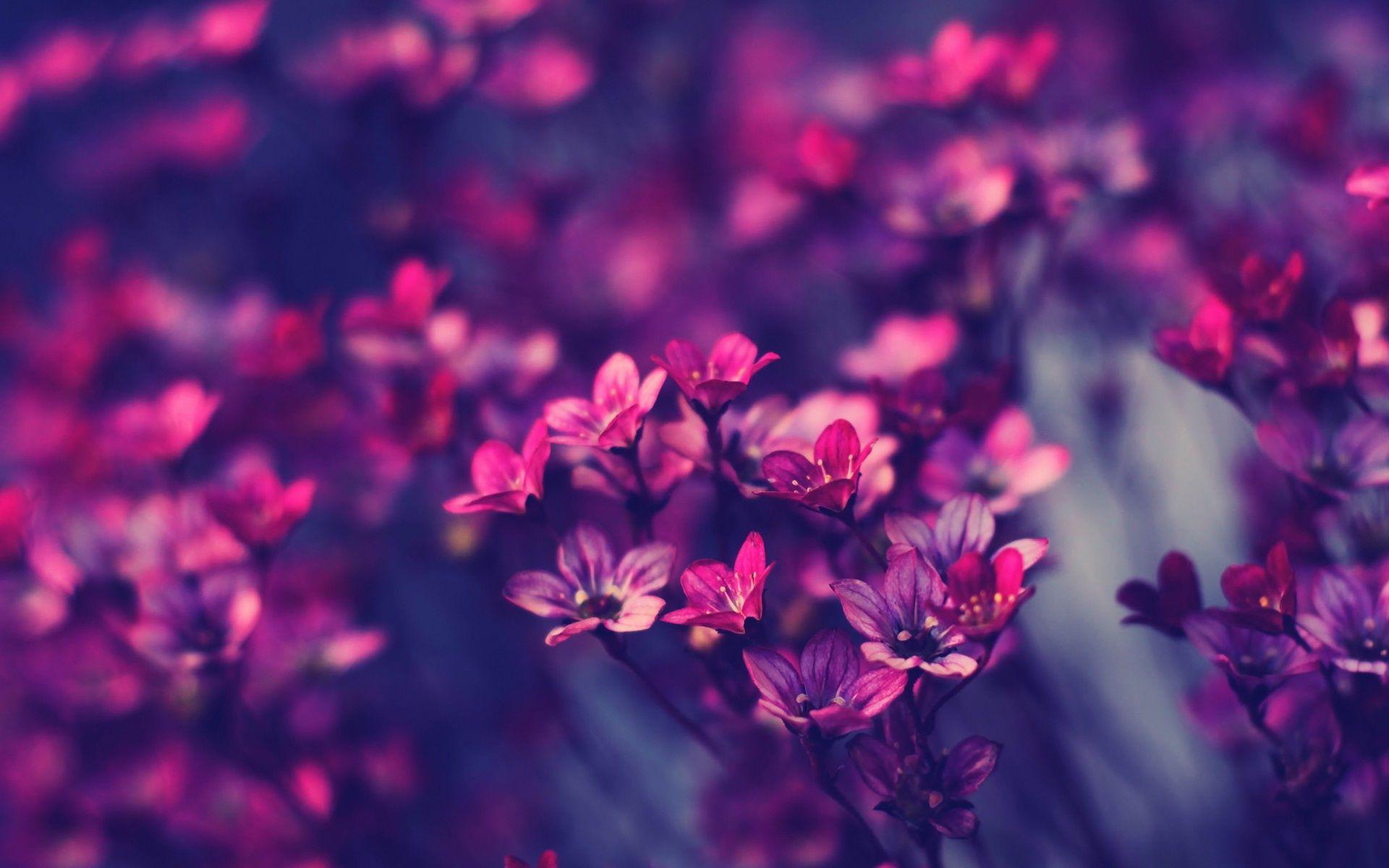 Free Wallpaper Little Purple Flowers Nature Mobile