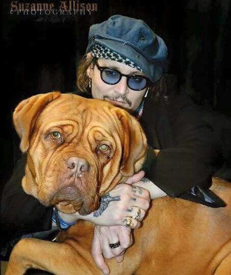 Awwwwwwwjdjkdkshskaosndj French Mastiff Dog Johnny Depp Characters Johnny Depp Fans