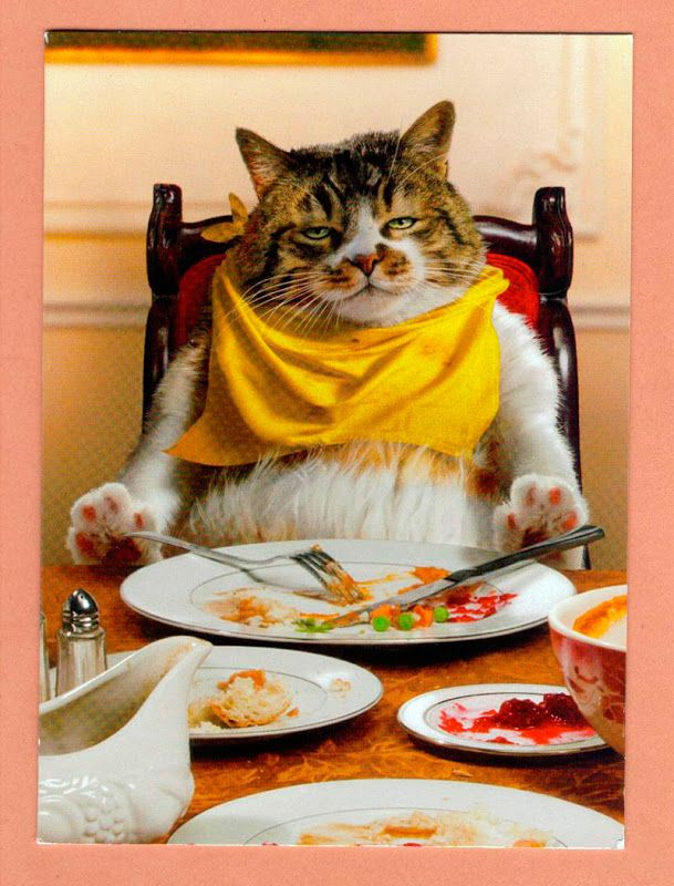 Thanksgiving is EVERY day.... Funny cats, Cute cats