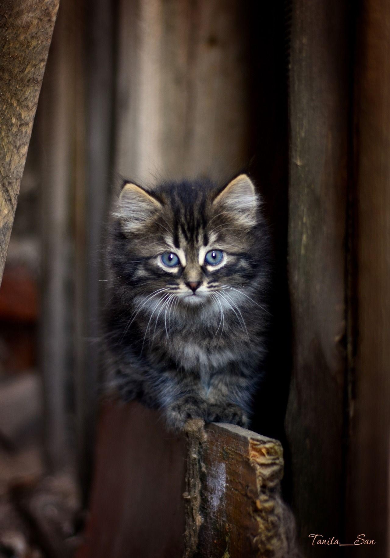 Adorable kitten Kittens Pinterest Adorable kittens Cat and Animal