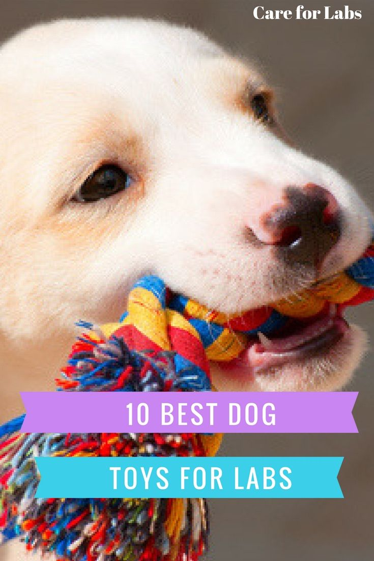 Check Out This Helpful List Of The Top 10 Best Dog Toys Best