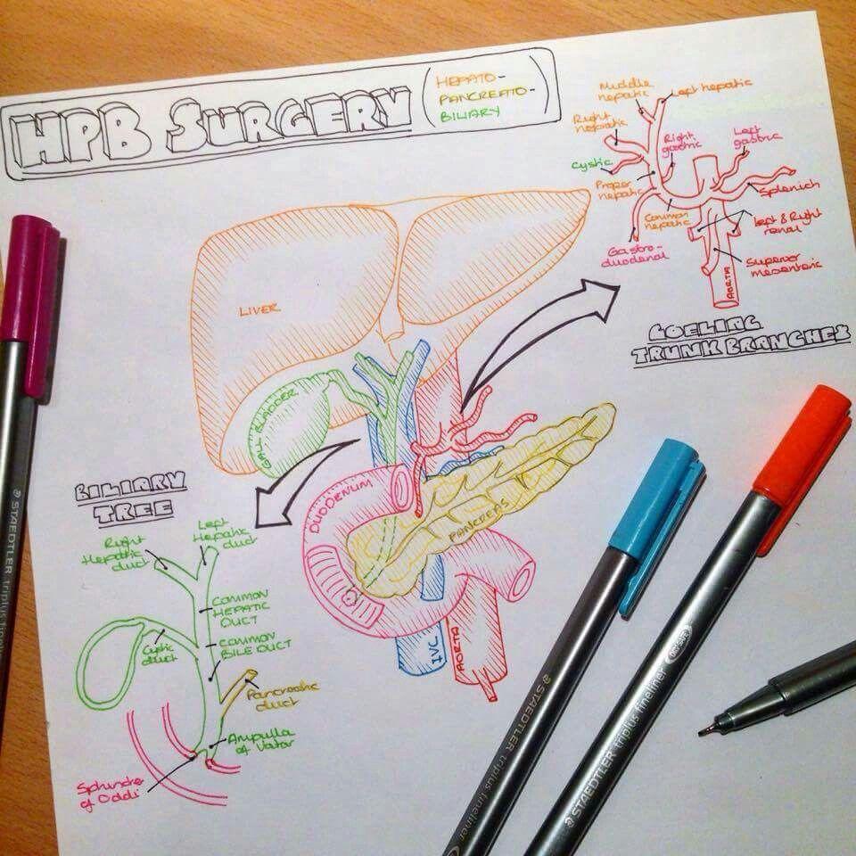 pinterest @esib123 // #medical school #medicine #MD | Oktatás ...