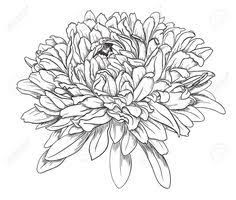 Image Result For Chrysanthemum Outline Aster Flower Tattoos Chrysanthemum Drawing Chrysanthemum Tattoo