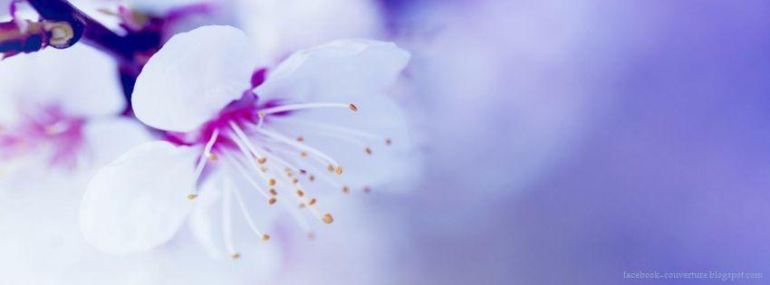 Groupe des couvertures journal Facebook fleurs ~ Photo et
