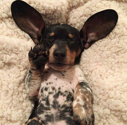 Reese sleep-waving