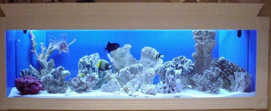 150 Gallon Fowlr In Wall Saltwater Tank Saltwater Fish Tanks Fish Tank 150 Gallon Fish Tank