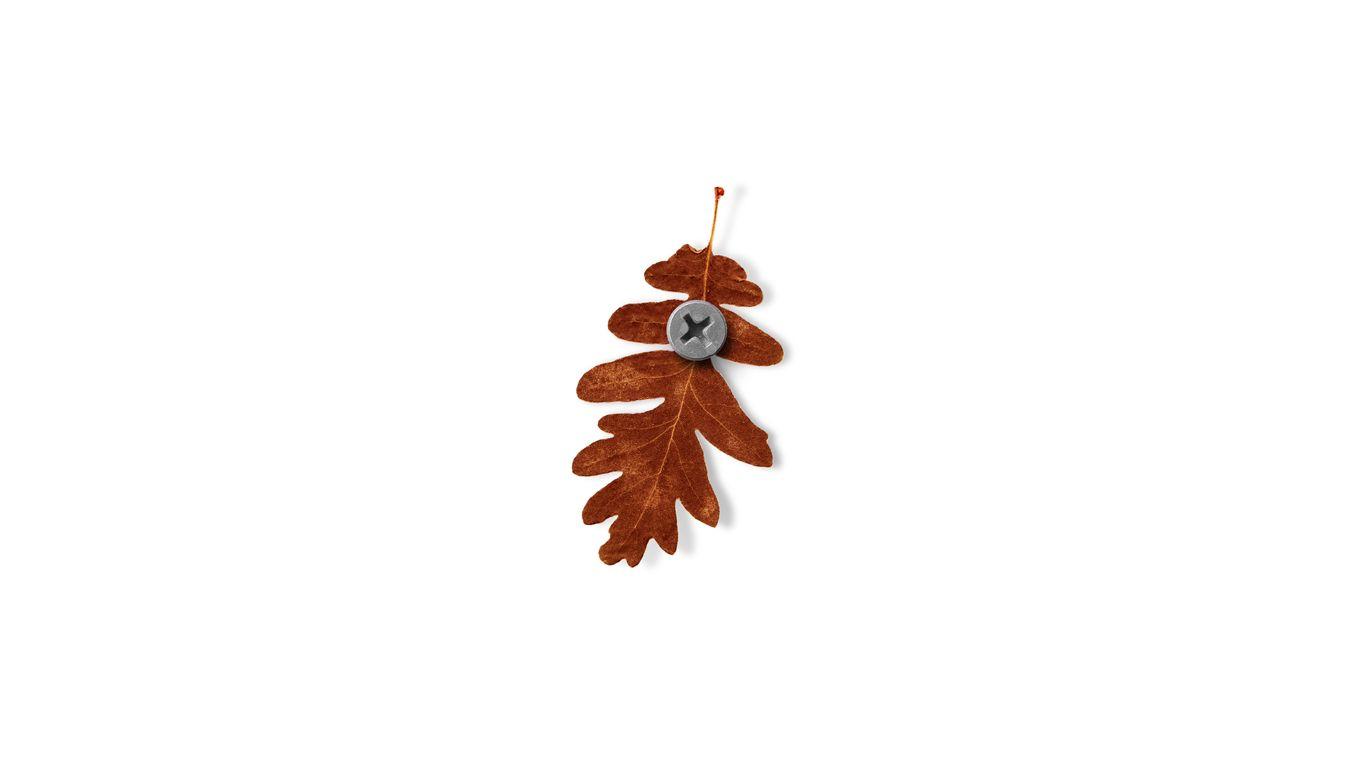 Otoño, autumn hoja, roble, leaf, oak