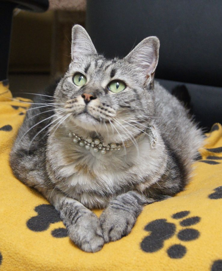 Gracie Frankie Survive Kitty Animals Frankie