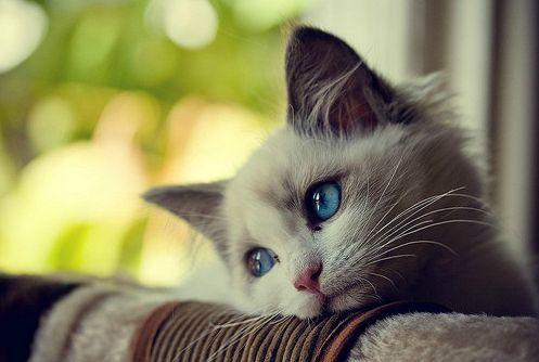 First World Problems Cat Blank Meme Template  Csak gy