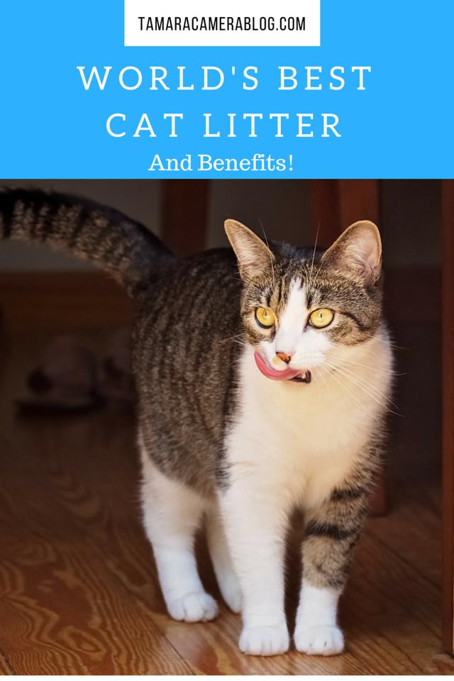 The World's Best Cat Litter & Its Benefits Natural cat