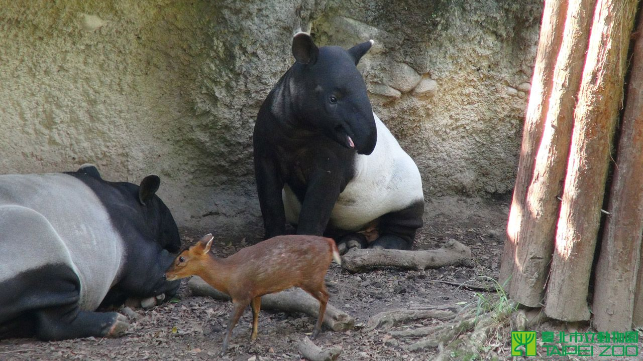 Pin by wenchi lin on education animals kangaroo goats