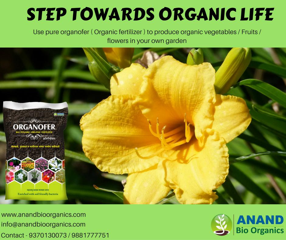 Pin by Anand Bio on Organic gardening   Flowers, Garden