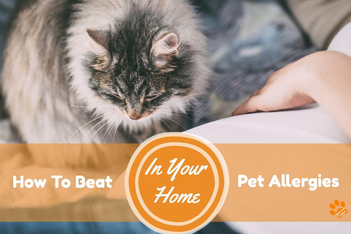 How To Beat Pet Allergies In Your Home Pet allergies