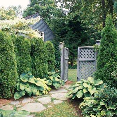 Gate with arborvitae fence