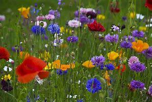 Spring Meadow Wallpaper Bing Images Beautiful Flowers Flowers Spring Flowers