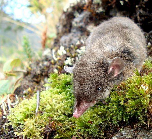 Mammalogy Image Archives: Marsupialia