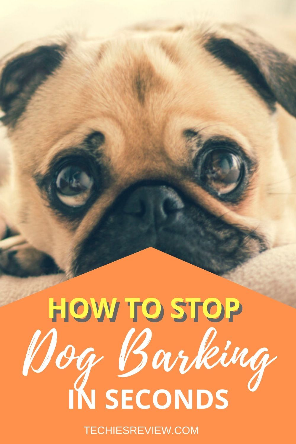 How to train your dog to stop barking by using the device