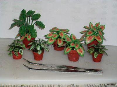 plantas en miniatura - Buscar con Google