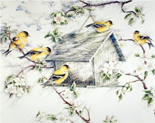 Blubirds At Birdhouse And Wild Birds At Feeder House Two Set 8x10 Wall Art Print