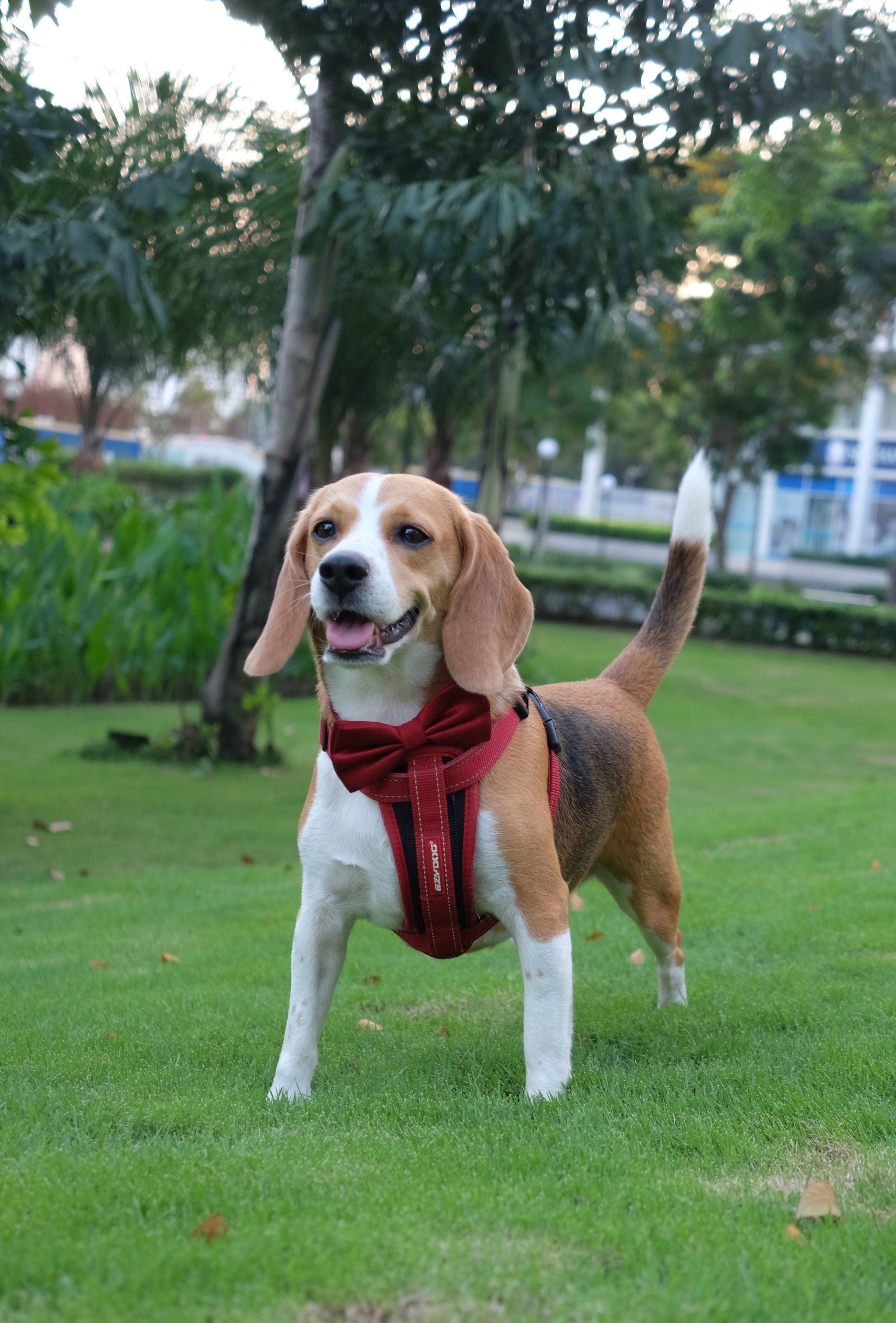 Pin By Yen Nguyen On My Lovely Beagle Beagle Breeds Pets Puppies
