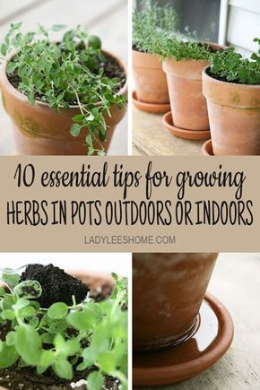 Container Herb Garden: 10 Tips for Success
