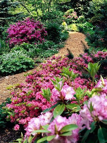 se Flowering Shrubs We typically think of perennial paisajes - paisajes jardines