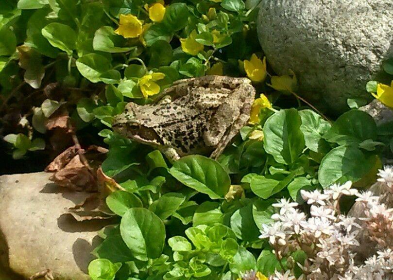 Frosch Garten Frosche Natur