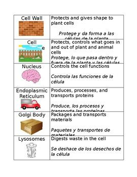 cell organelle matching with spanish cell wall animal on cell wall function id=81613