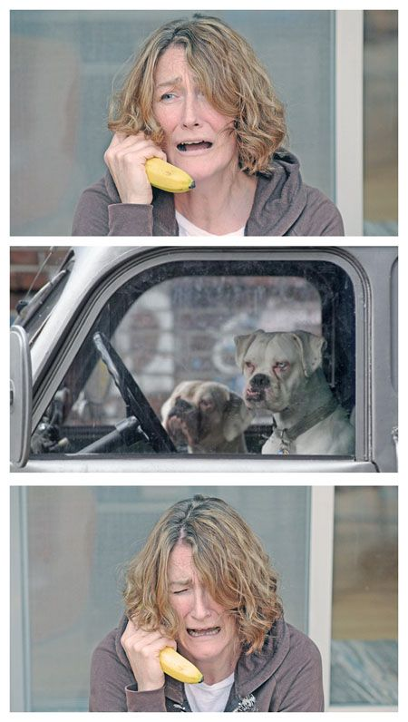 Banana Phone Meme : banana, phone, Really, Explain, Comic, Much,, Laugh, Every, Funny, Pictures,, Animals