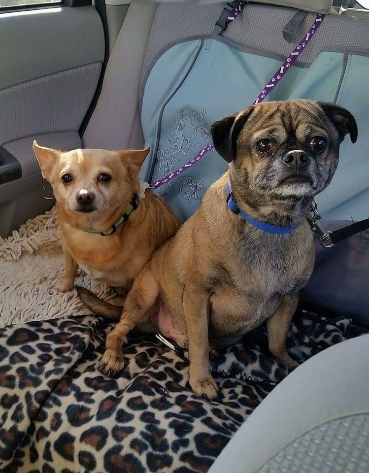 Adopt rico adoption pending on petfinder cute animals