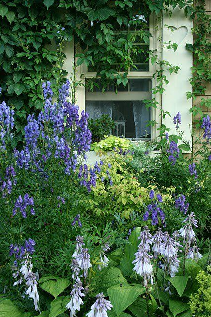 Climbing Vines Around The Window And The Blue And White Cottage Garden Flowers Beneath The Window Are Beautiful Cottage Garden Shade Garden Beautiful Gardens