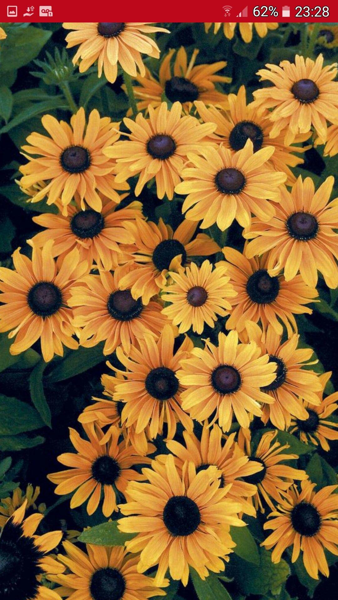 Fall Sunflowers Wallpaper Flores Flores Papel De Parede De Girassol Planos De