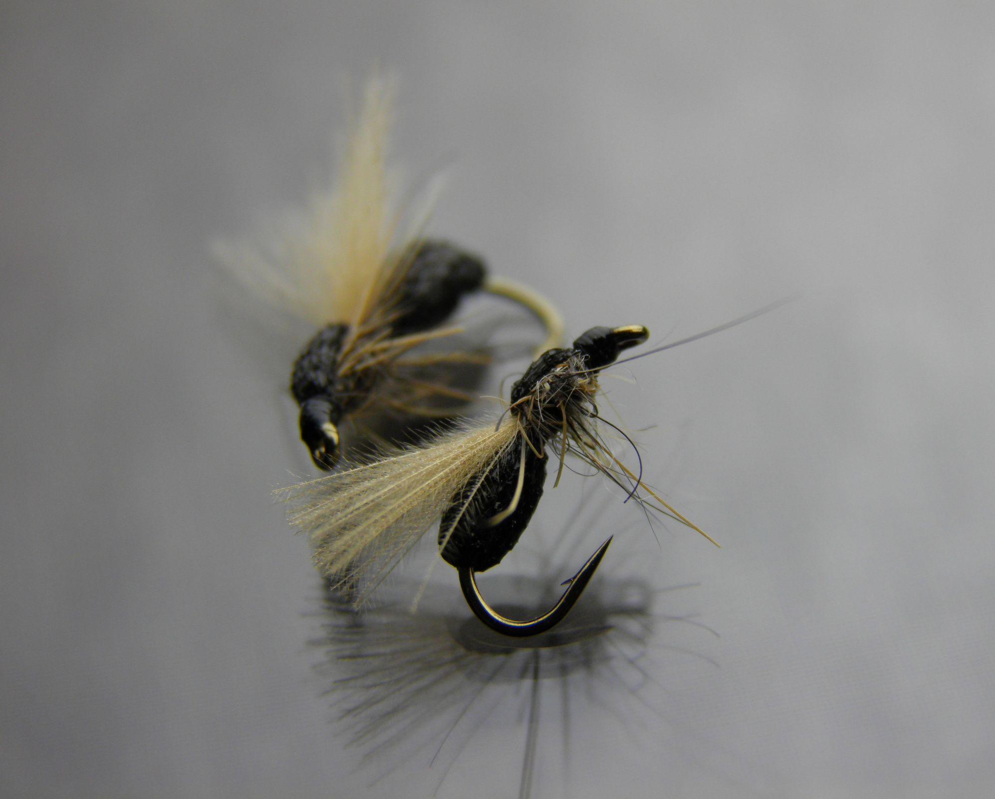 mouches pinterest les fourmis fourmis et mouches. Black Bedroom Furniture Sets. Home Design Ideas