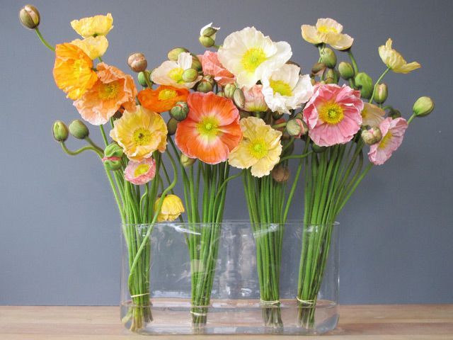 Poppy flower arrangements garden design ideas poppy flower arrangements images decoration ideas mightylinksfo