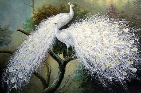 Livraison Gratuite Peinture A L Huile Peinte A La Main Bel Art De Paon Blanc Peinture Deco Dans Peinture Et Calligraphie De M Paon Blanc Art Paon Croix Peintes